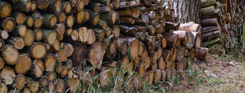 firewood contains wood loving pests
